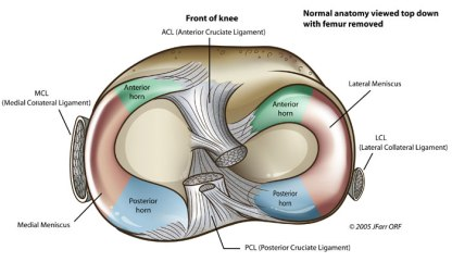 front-acl-anterior-cruciate-posterior-ligament-medial-lateral-collateral-jfar-orf-lcl-lateral-meniscus-knee-meniscus-anatomy-normal-view